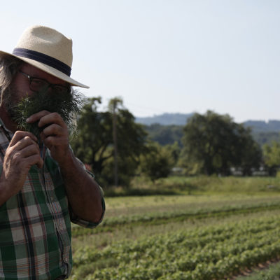 This is simply Herb paradise. Dill, Rosemary, Coriander, Lemon-Basil, Savory......