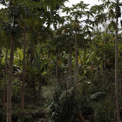 This was the papaya farm - wild and so natural.